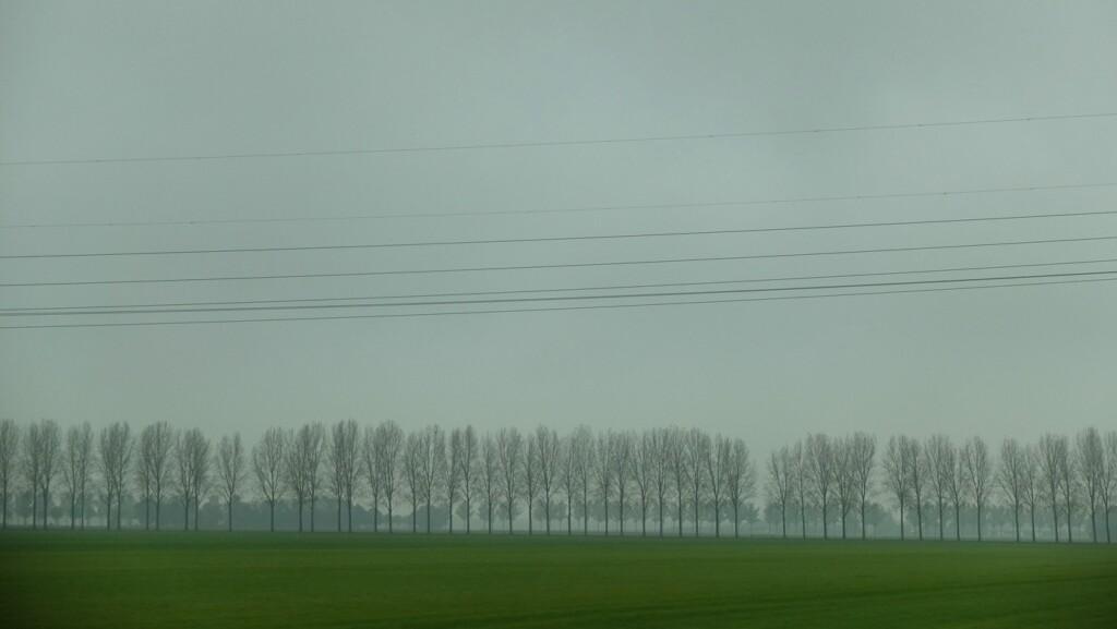 Kale bomen langs snelweg