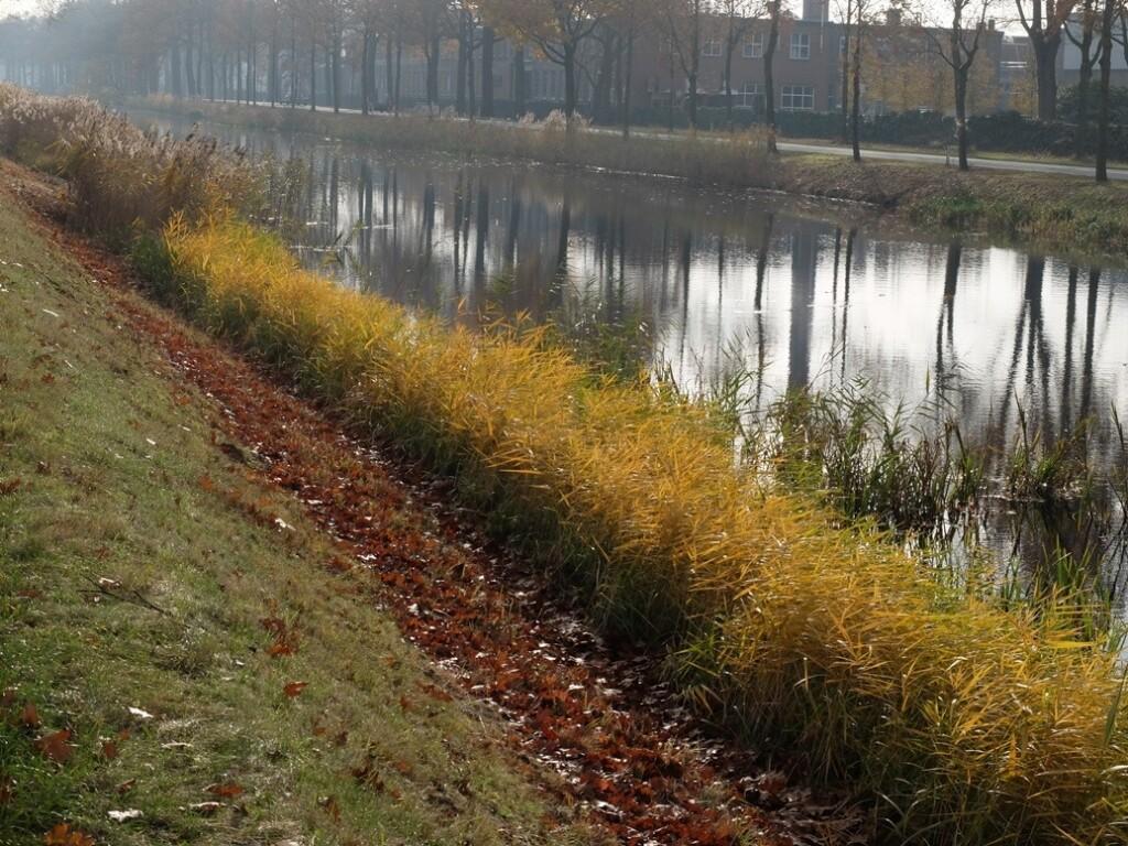 Riet langs kanaal