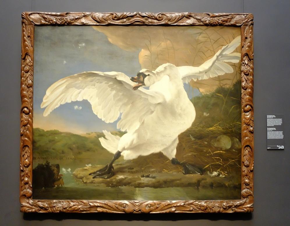 Schilderij de bedreigde zwaan Jan Asselijn